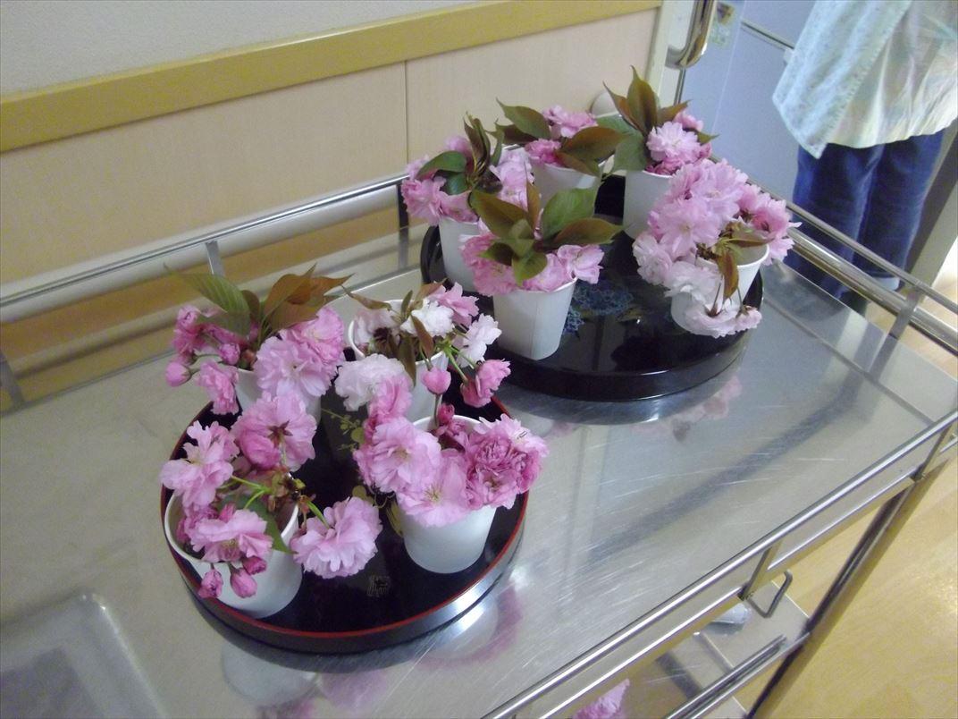 緩和ケアお花見、八重桜