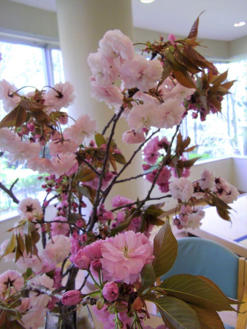 八重桜の枝