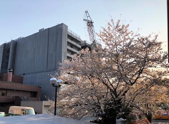 がんセンターの桜事務局棟側