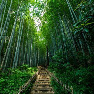 佐倉の竹林道