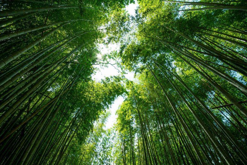 佐倉の竹林